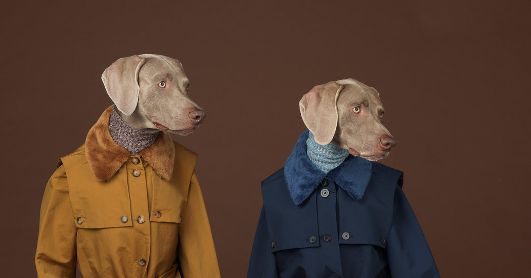 William Wegman's work