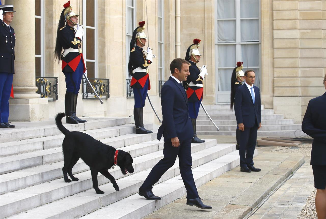 france first dog